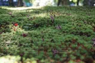 庭園の写真・画像素材[1034061]