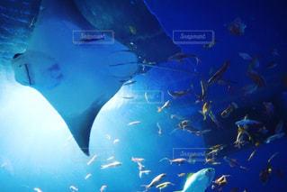 水中の写真・画像素材[1034147]