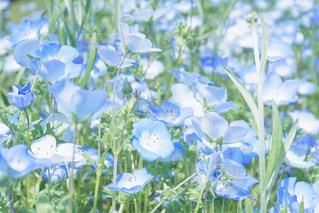花の写真・画像素材[1057832]