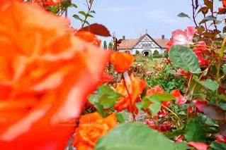 ガーデンの写真・画像素材[1059750]