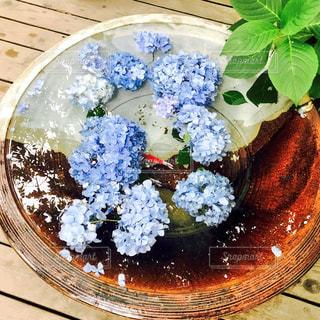 紫陽花と金魚の写真・画像素材[1034186]