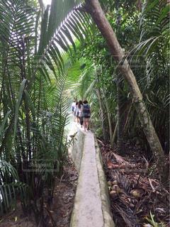 熱帯雨林の小道の写真・画像素材[1070568]