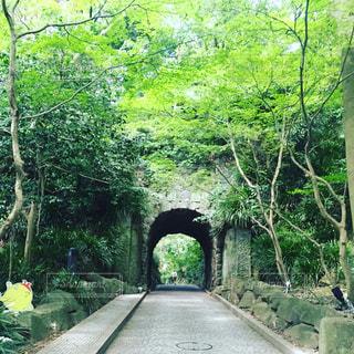 緑とトンネルの写真・画像素材[1070640]
