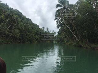ボホール島のジャングルの写真・画像素材[1075974]