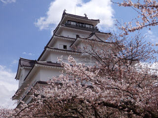 福島県会津若松市にある鶴ヶ城と桜の写真・画像素材[1085775]