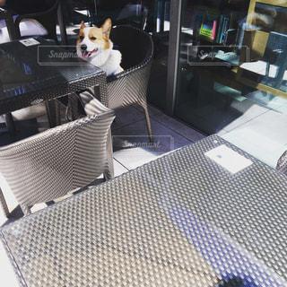 椅子に座っている犬の写真・画像素材[1034368]