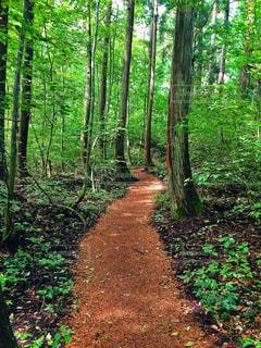 緑豊かな森の真ん中の道の写真・画像素材[1034465]