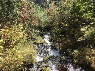 山の中の小川の写真・画像素材[1034959]