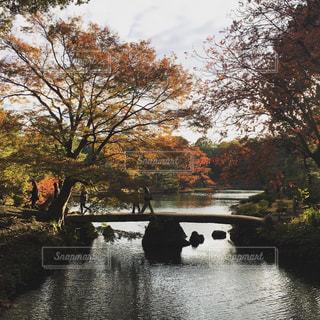 秋に色づく六義園の写真・画像素材[1034435]