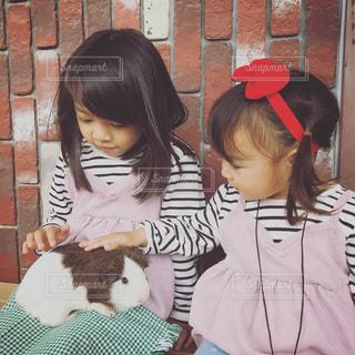 モルモットと触れ合う娘たちの写真・画像素材[1035197]