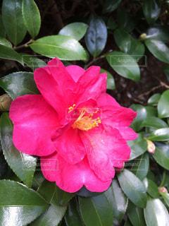 近くの花のアップ - No.1035224