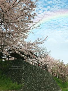 桜 - No.1038161