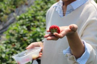 イチゴを持っている手 - No.1070467
