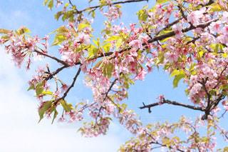 春の陽気 - No.1070470