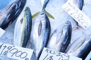 新鮮な魚 - No.1070474