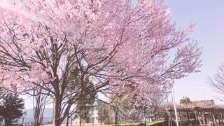 春の公園 - No.1080251