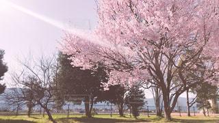 春の公園 - No.1080252