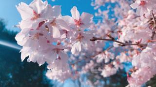 近くの花のアップ - No.1080253