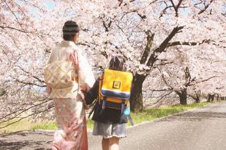 桜と1年生の写真・画像素材[2023474]