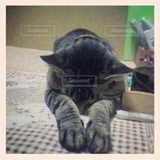 猫 - No.33932