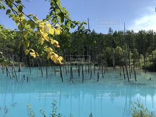 青い池の写真・画像素材[1034779]