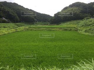 近くに緑豊かな緑のフィールドのの写真・画像素材[1039714]
