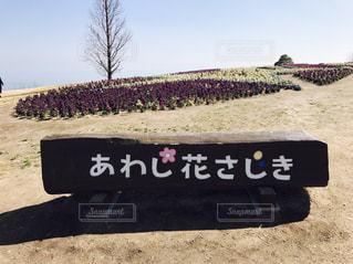 花さじきの写真・画像素材[1036774]