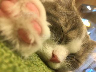 猫とお昼寝の写真・画像素材[1040026]