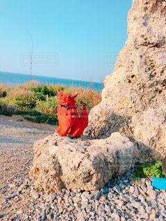 沖縄シーサーの写真・画像素材[1035225]