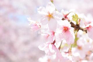 近くの花のアップ - No.1036484