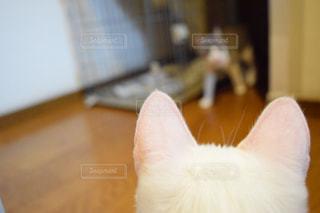 近くに猫のアップ - No.1066086