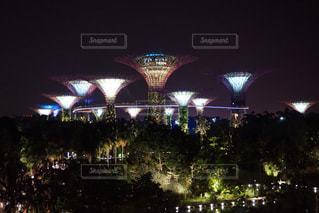 夜の植物園の写真・画像素材[1035175]