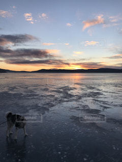 人と水の体の犬の写真・画像素材[1036202]