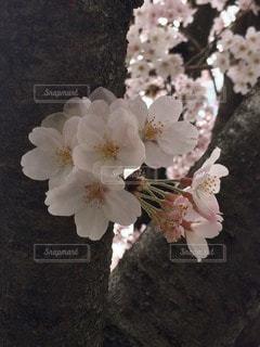 自然の写真・画像素材[34094]