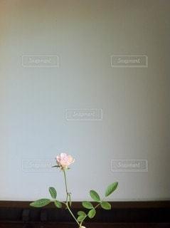 自然の写真・画像素材[62757]
