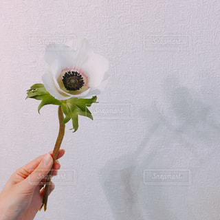 花を持つ手の写真・画像素材[1035868]