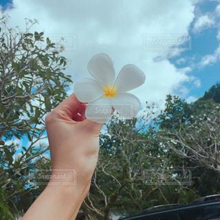 花を持っている手の写真・画像素材[1073534]