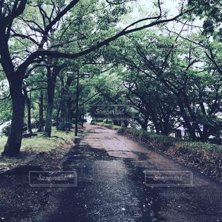 森林の写真・画像素材[1420427]