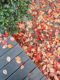 紅葉の落ち葉の写真・画像素材[2832531]