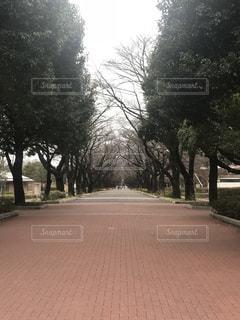 並木道の写真・画像素材[1223916]