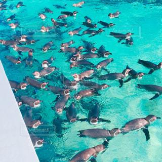 水のプールを泳ぐ人たちのグループの写真・画像素材[1036439]