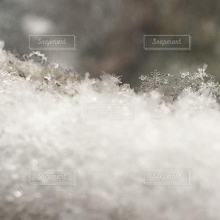 雪の結晶の写真・画像素材[1036451]