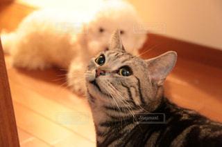 見上げるネコと控え目な犬の写真・画像素材[1040586]