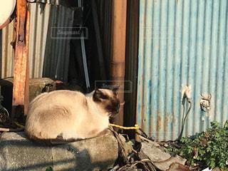地面に横になっている猫の写真・画像素材[1035934]