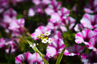 近くの花のアップの写真・画像素材[1319729]