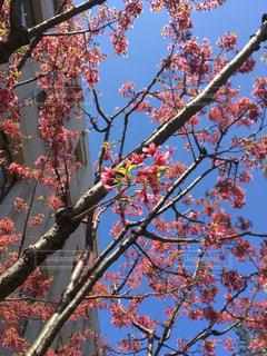 五感で春を感じて見よう!の写真・画像素材[1064286]