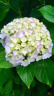 近くの花のアップの写真・画像素材[1036220]