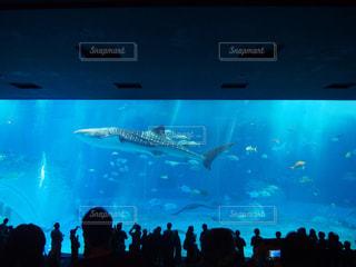 バック グラウンドで沖縄美ら海水族館と画面を見ている人の大群衆の写真・画像素材[1036520]