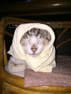 帽子をかぶった猫の写真・画像素材[1037385]