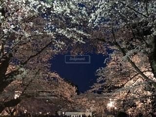 近くの木のアップの写真・画像素材[1148735]